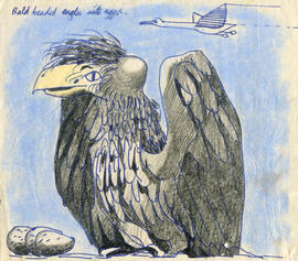 A drawing of a bald headed eagle with eggs: Bald headed eagle with eggs